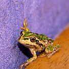 frog by alistair mcbride
