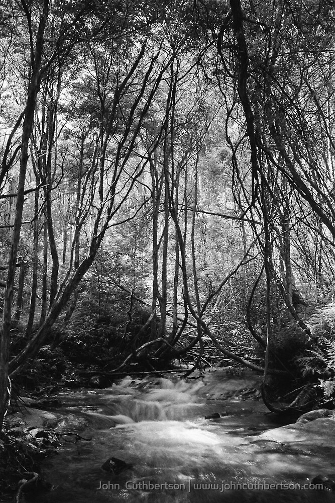 Stream in Trees, Victoria by John  Cuthbertson | www.johncuthbertson.com