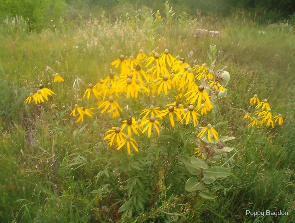 Yellow Daisy by Poppy Bagdon