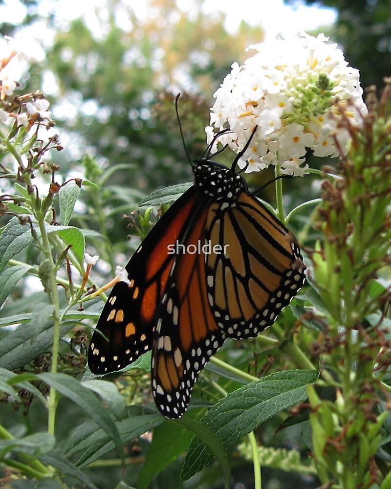 Sweet Nectar by sholder