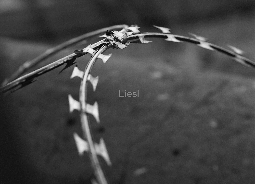 Wire by Liesl