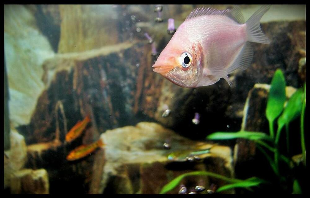 Fishy  by Melissa  Carroll
