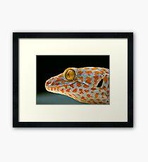 Spottyhead Framed Print