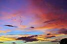 Tropical FNQ Sunset Splendor  by Kerryn Madsen-Pietsch