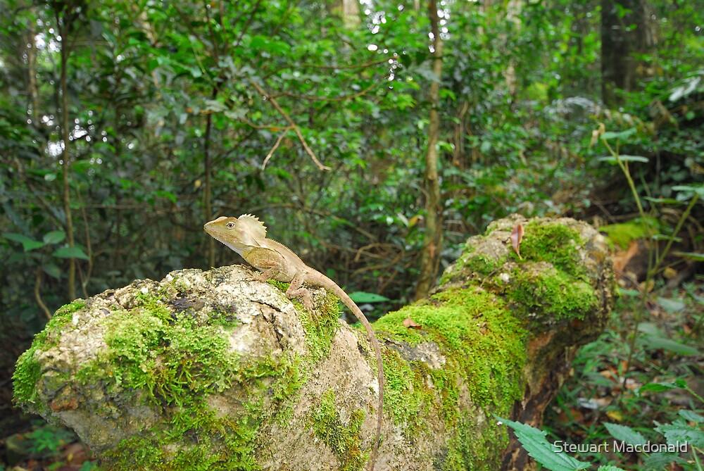 Rainforest dragon by Stewart Macdonald