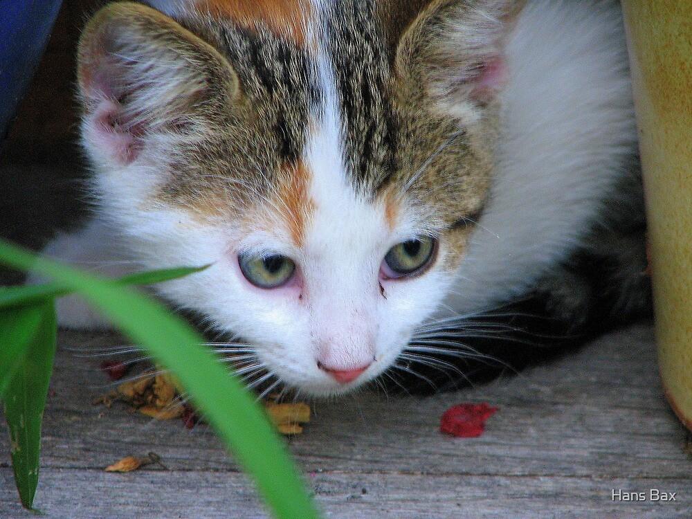 Kitten by Hans Bax