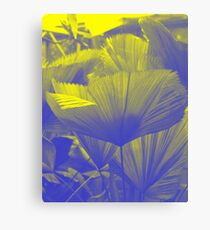 Frond : Photography by Alys Griffiths Canvas Print