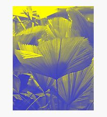 Frond : Photography by Alys Griffiths Photographic Print