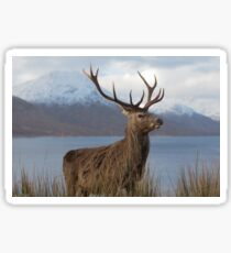 Red Deer Stag in Winter Sticker