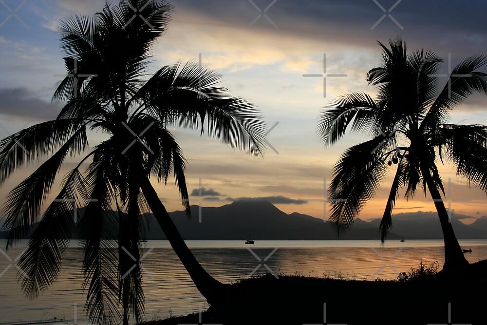 Tropical Palm trees at sunrise near Cairns, Australia.  by Victoria Ashman