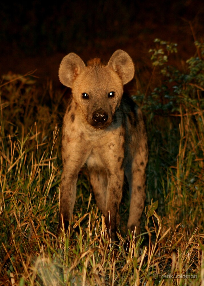 Spotted Hyena by FrankSolomon
