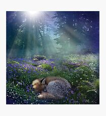 Bluebell Dawn Photographic Print