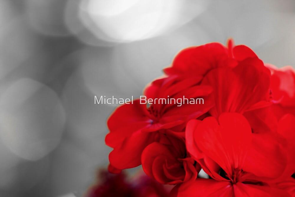 Vibrant by Michael  Bermingham