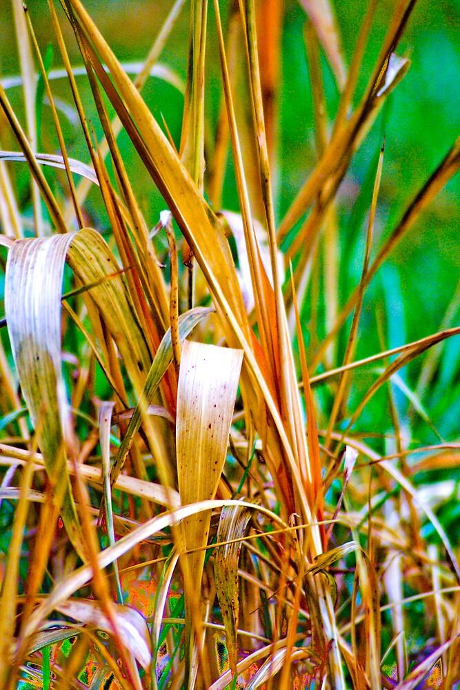 Golden Grass by Rod  Adams