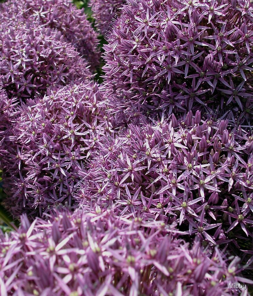 Allium pom poms by Mibby