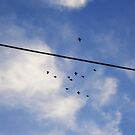 Birds on a Wire by mandiepandieX