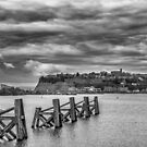 Cardiff Bay Dolphins Mono by Steve Purnell