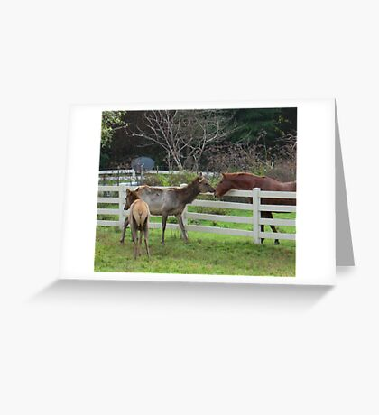 introduction of the species Greeting Card