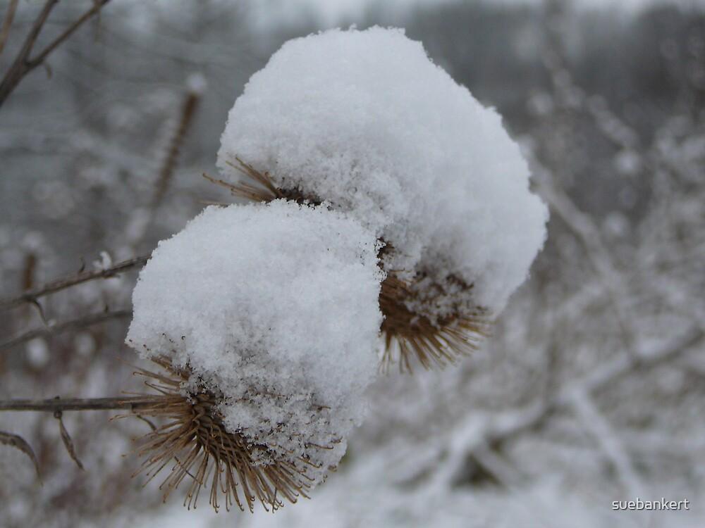 White Fluffy Hats by suebankert