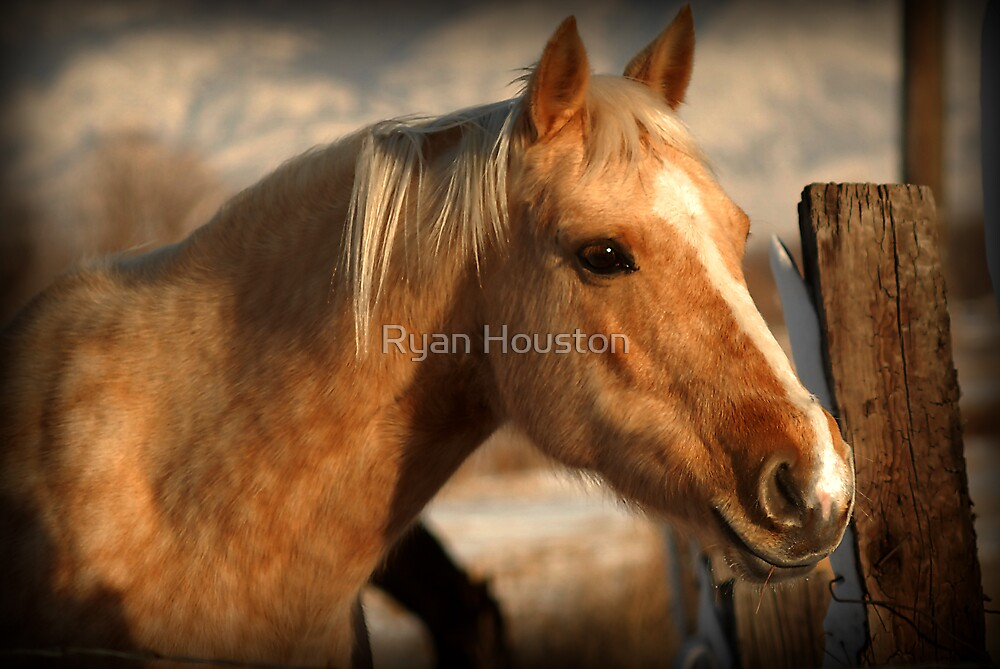 Golden Horse by Ryan Houston