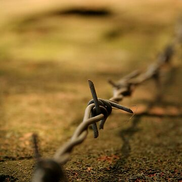 Barbed by lewispackman