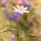 Woodland Anemone by JEZ22