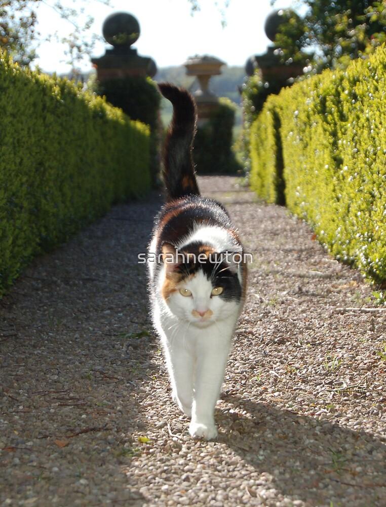 poppy - my profile cat :) by sarahnewton