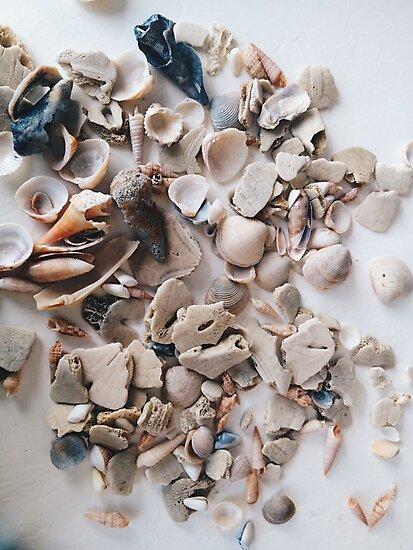 Seashells by alyssaschi