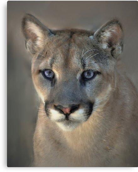 Cougar by Savannah Gibbs