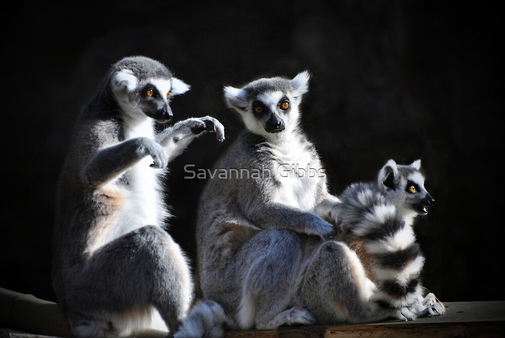 Ring-tailed Lemur Family by Savannah Gibbs