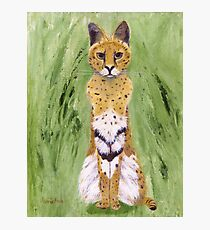Serval Cat Photographic Print