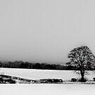 Over The Fields to Edinburgh by Chris Clark