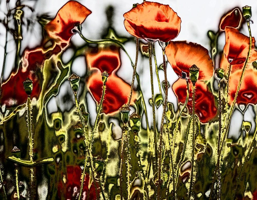 Poppies by Ramona Farrelly