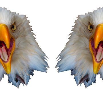 Double Screaming Bald Eagles by Dalyn