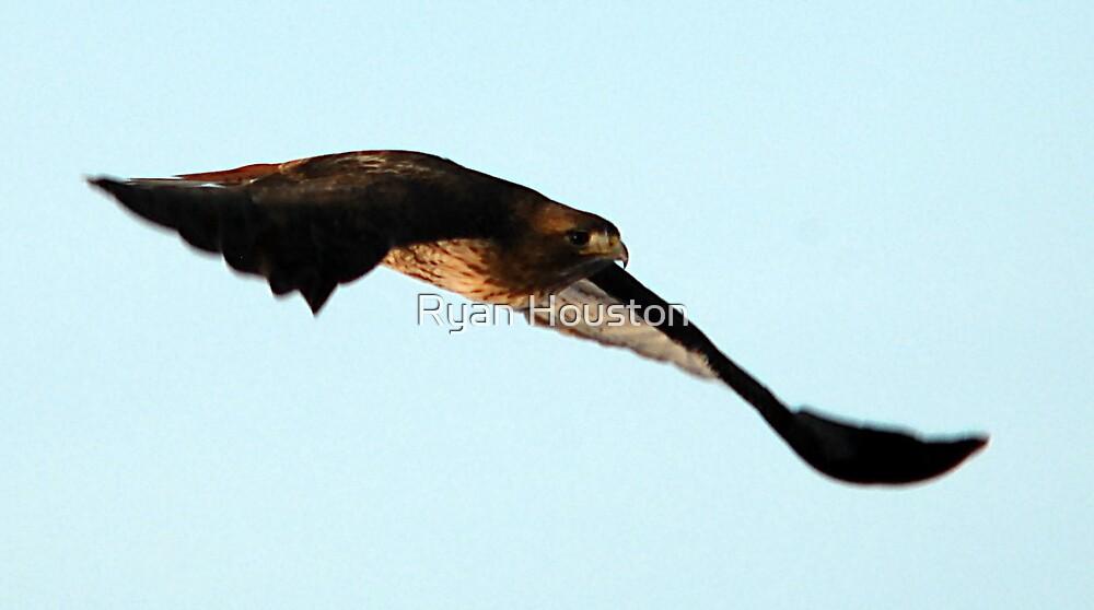 Soaring Redtail Hawk by Ryan Houston