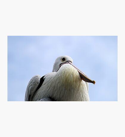 Not Just Another Pelican  Photographic Print