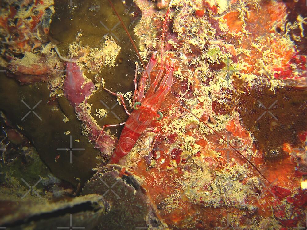 Tengin Pier Shrimp #2 by Michael Powell