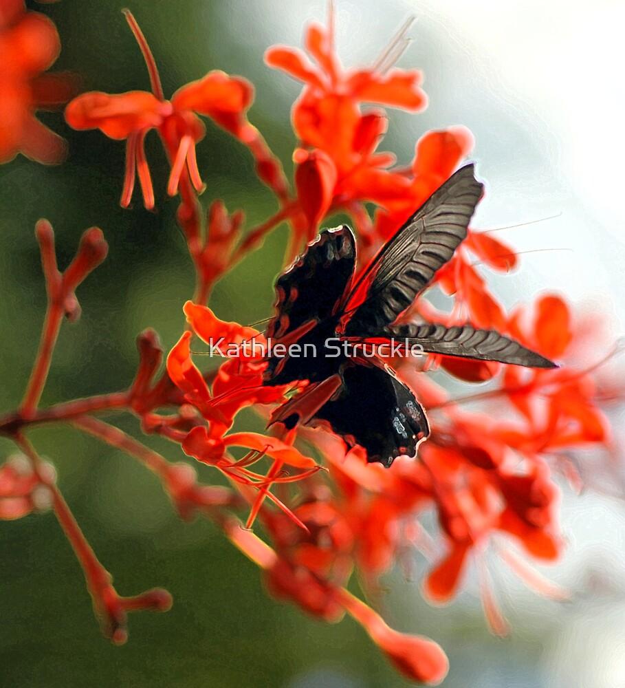 Black Lace On Orange by Kathleen Struckle
