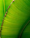 Banana Leaf in Abstract 0529 by Larry Costales
