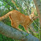Tooey the Marmalade Cat by Vivian Eagleson