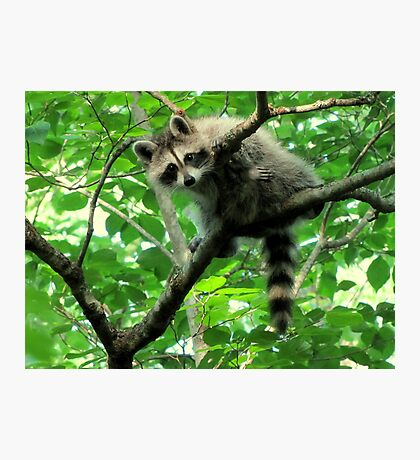 Yeah, I'm just hangin' out. Whatchu doin'? Photographic Print