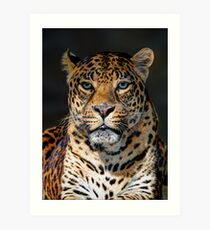Portrait of Leopard Art Print