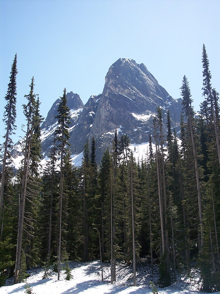 Mountain trees by Valerie