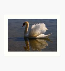 Mute Swan #1   Art Print