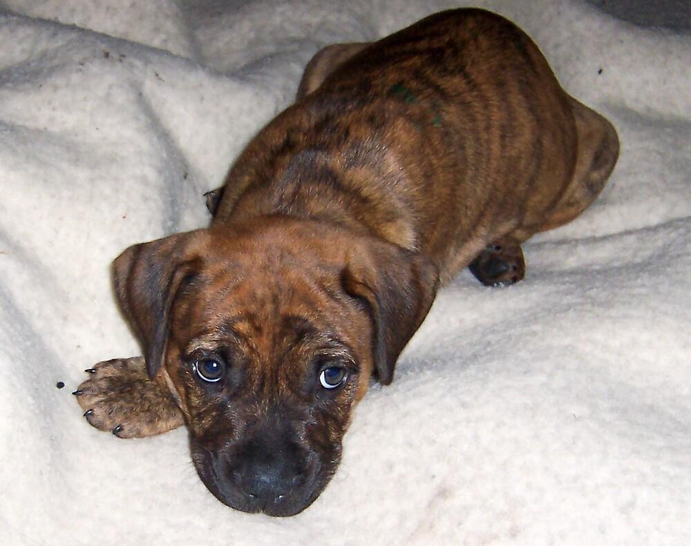 puppy love.cute,cute,cute! by heathy