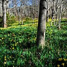 Daffodils field forever... by Poete100