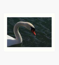 Mute Swan #4  Art Print