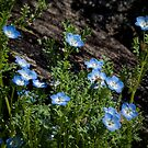 Cheerful blue wildflowers by Celeste Mookherjee