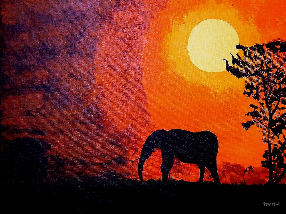 African Sunset by terriP