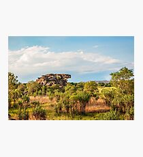 Almost typical Australian Landscape: green and gold Photographic Print